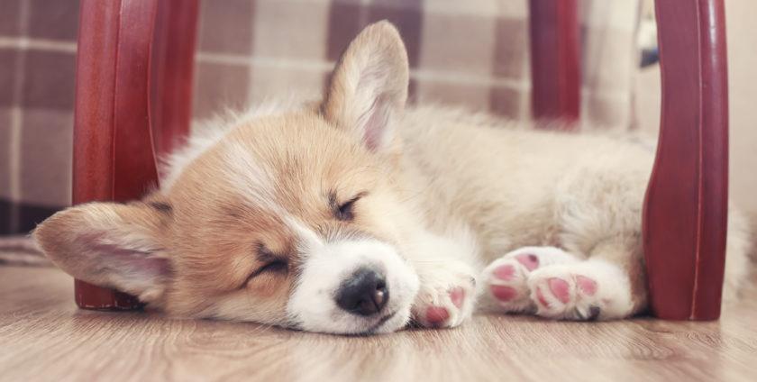 Pet-Friendly Flooring Options